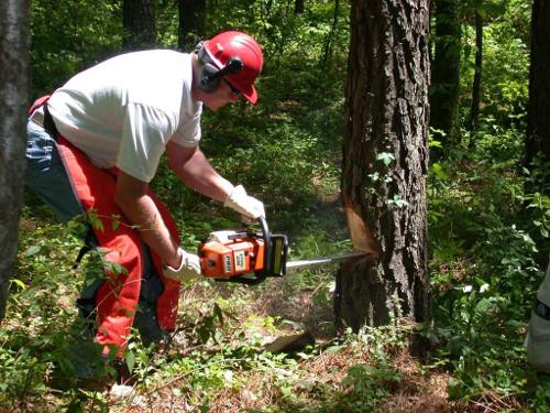 Tree Contractors Sefton