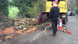 Tree Services Sefton